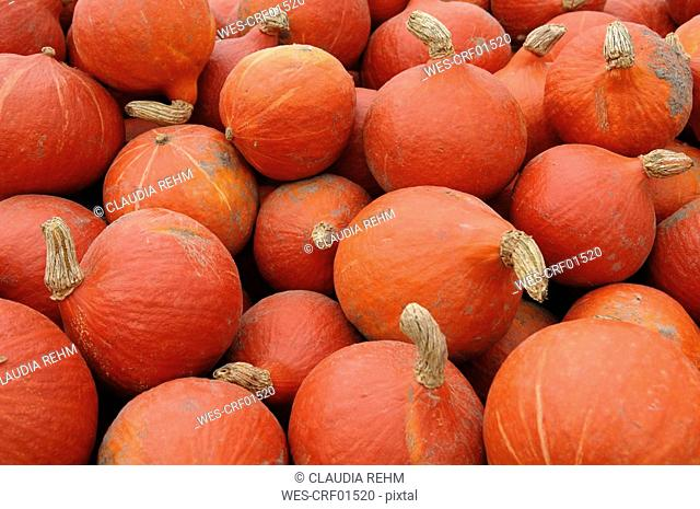 Pumpkins, Cucurbita, full frame, close-up
