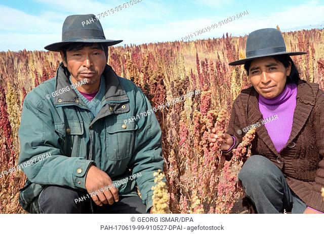 Quinoa farmer Julian Canavari and his girlfriend Matilde Duran harvest red Quinoa near the town of Challapata, Bolivia, 27 May 2017