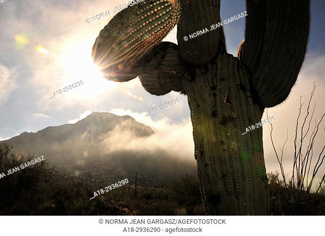 Winter storms brings fog and rain to Tucson Mountain Park, Sonoran Desert, Tucson, Arizona, USA