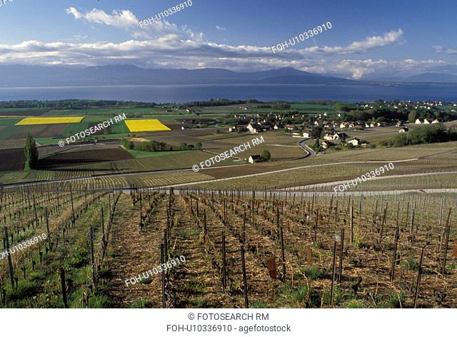 Switzerland, Vaud, La Cote, Fechy, Lake Geneva, Europe, Scenic view of the countryside covered with vineyards and the village of Fechy in the spring along Lac...
