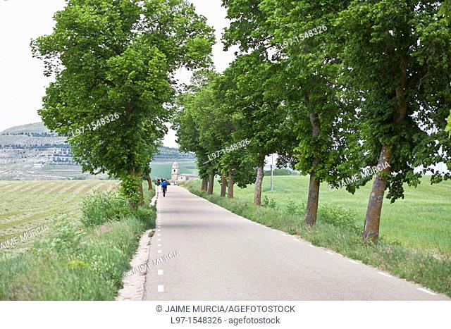 Tree lined road, north of Spain, Camino de Santiago