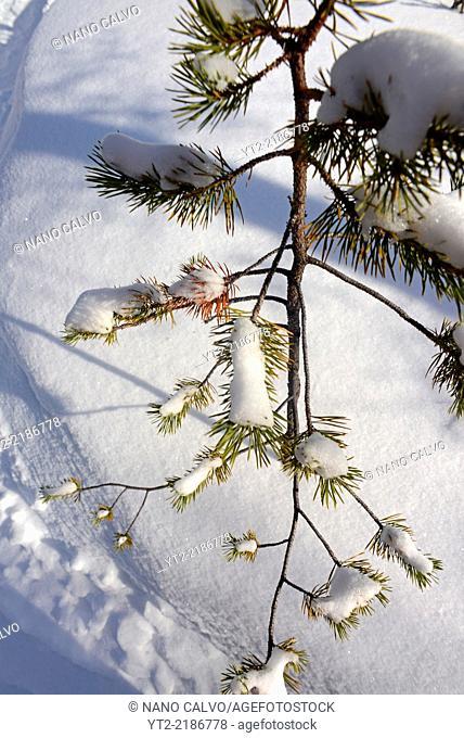 Winter landscape in Kakslauttanen Arctic Resort, Saariselka, Finland