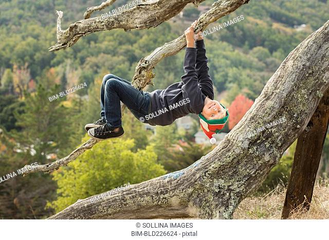 Caucasian boy hanging upside-down on tree branch