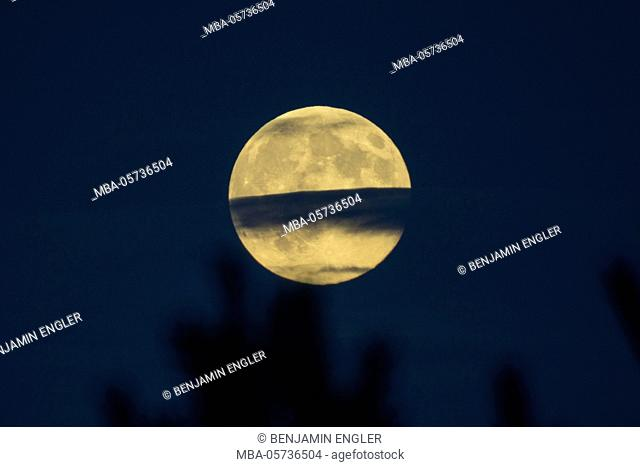 Full moon in the background, treetops blurred in the foreground