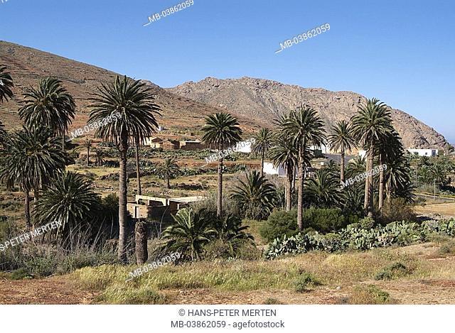Spain, Canaries, island Fuerteventura, Vega Rio Palmas