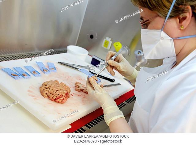 Doctor taking samples of brain, Anatomic Pathology, Hospital Donostia, San Sebastian, Basque Country, Spain