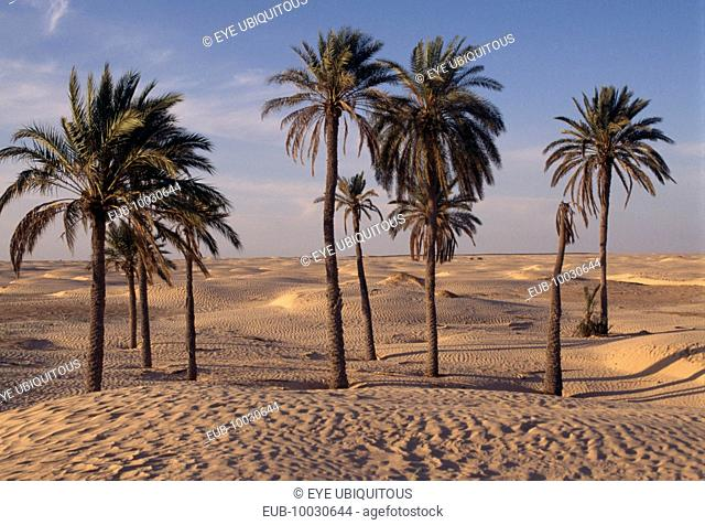 Palms in the sand at the edge of an oasis with the desert beyond