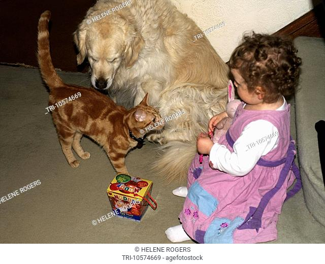 20 Month Old Girl Playing with Golden Retriever and Ginger Kitten