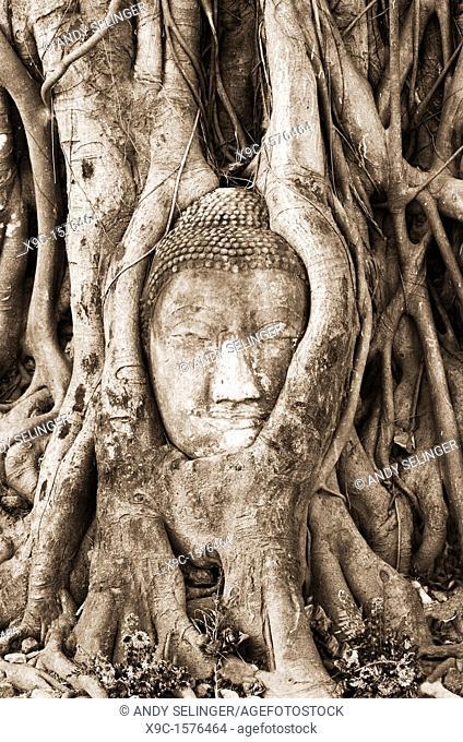 Buddha Head Stuck in Roots, Wat Phra Mahathat, Ayuthaya, Thailand