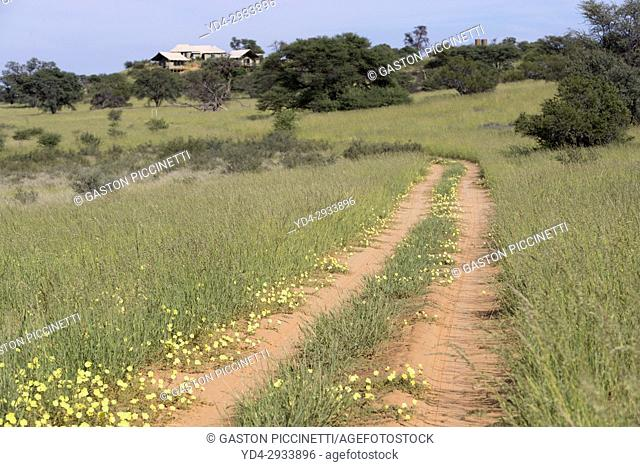Kgalagadi Transfrontier Park in rainy season, Kalahari Desert, South Africa/Botswana