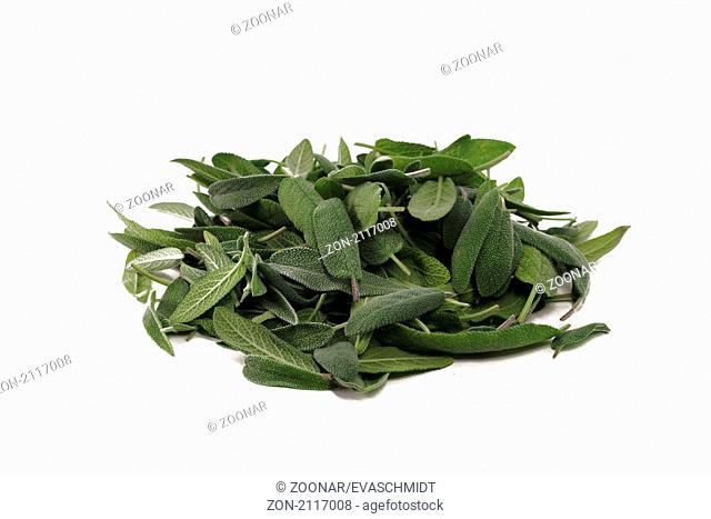 fresh sage leaves isolated on white background. Frische Salbeiblätter