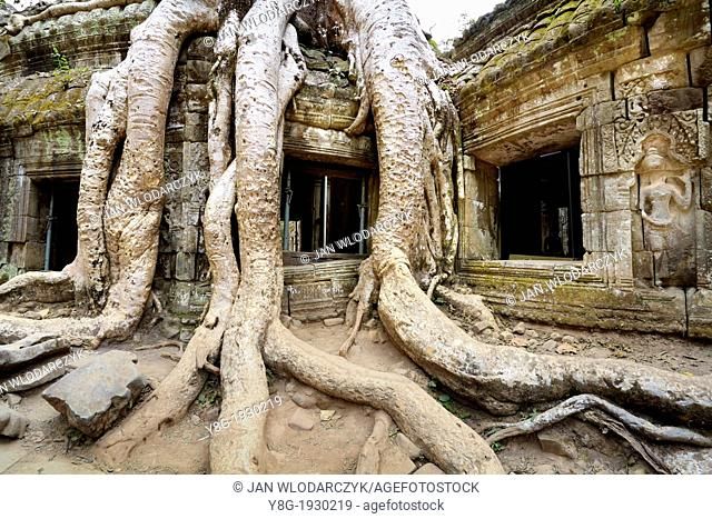 Angkor - huge roots overgrowing ruins of the Ta Prohm Temple, Angkor Temples Complex, Cambodia, Asia