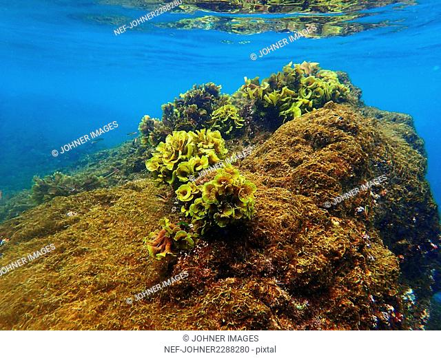Seaweed on underwater rocks