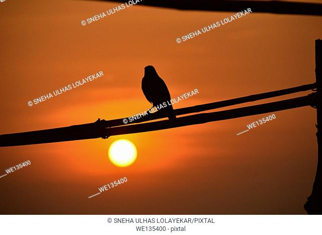 India, Goa, bird on a branch resting at sunset