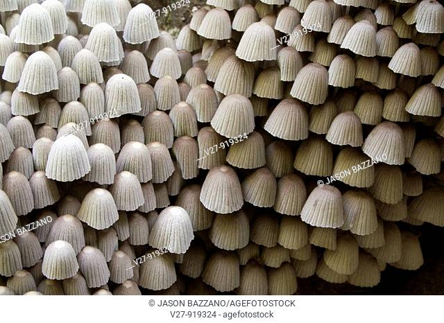 Wall of mushrooms  Photographed in the mountains of Costa Rica