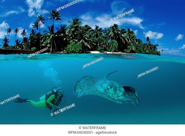 Diver and Stingray, Taeniura meyeni, Digital Composition
