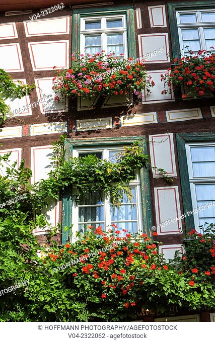 Close up of colorful flowers at a house front in Bacharach, Rhineland-Palatinate, Germany, Europe