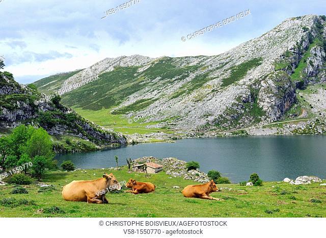 Spain, Asturias, Picos de Europa National Park, Lago Enol
