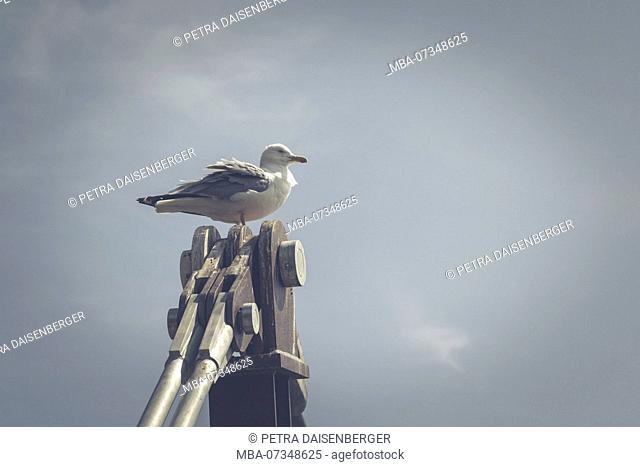 A seagull sitting on the pillar of the suspension bridge in Gibraltar