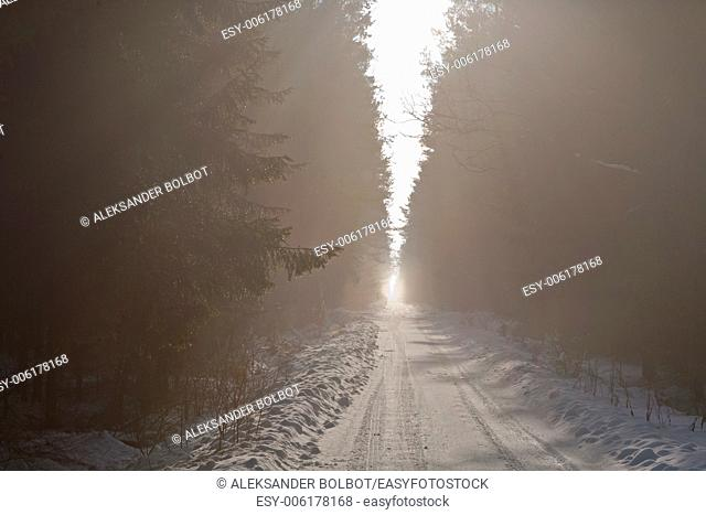 Snowy road crossing misty coniferous stand