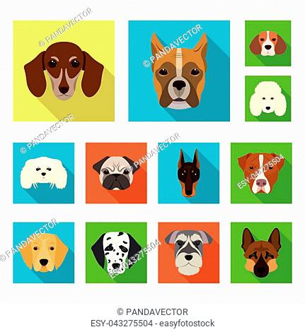 Dog breeds flat icons in set collection for design.Muzzle of a dog vector symbol stock illustration