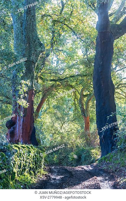 Path in Natural Park Aracena and Picos de Aroche, Marines, Huelva, Andalucia, Spain
