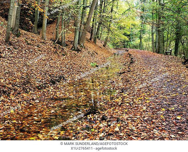 Carpet of Fallen Leaves at Skipton Castle Woods in Autumn Skipton North Yorkshire England