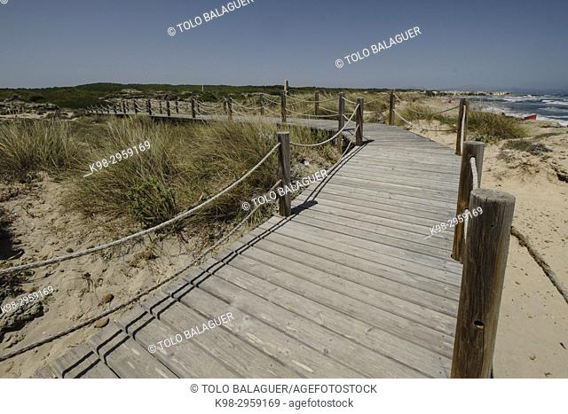 Wooden walkway over dunes, Son Serra de Marina, Mallorca, Balearic islands, Spain