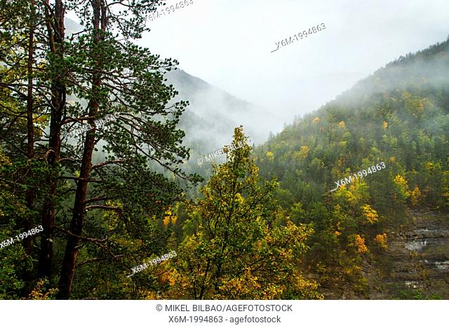 Mixed forest in autumn. Huesca, Aragon, Spain, Europe