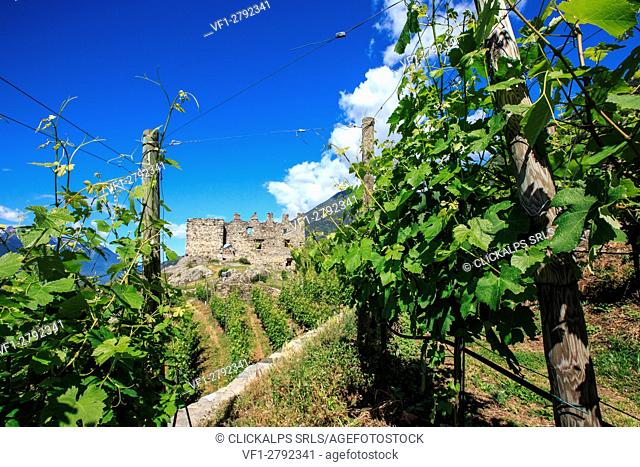 The ruins of Castle Grumello among the vineyards of Valtellina. Montagna in Valtellina. Sondrio. Lombardy. Italy. Europe