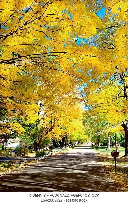 Fall colors in autumn with Maple Tree on Lake Huron Shore near Lexington Michigan