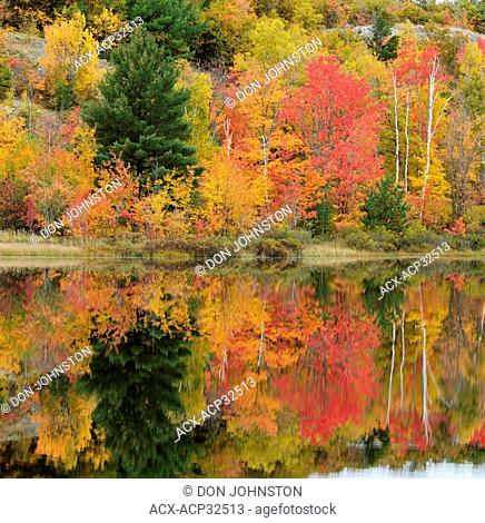 Autumn reflections in Gryphon Lake, Ontario, Canada