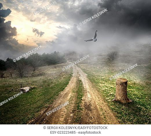 Bird over country road and storm clouds