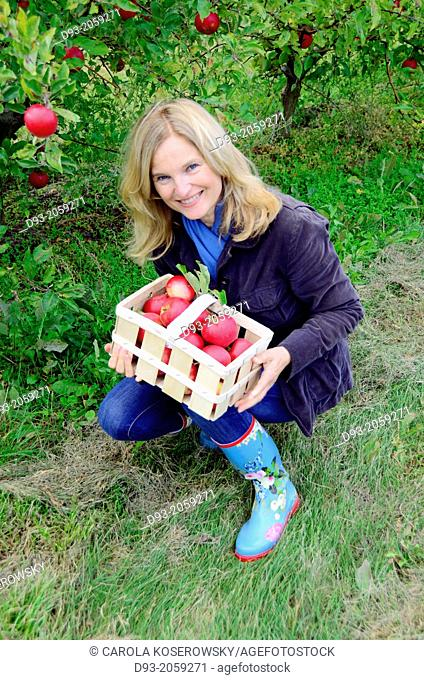 A lovely middle aged woman picking Apple smiling