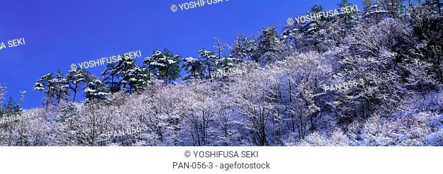 Fresh Snow on Trees, Kurikara Pass, Ishikawa, Japan