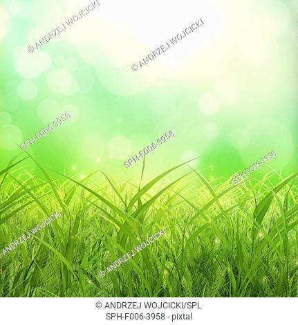 Grass, computer artwork