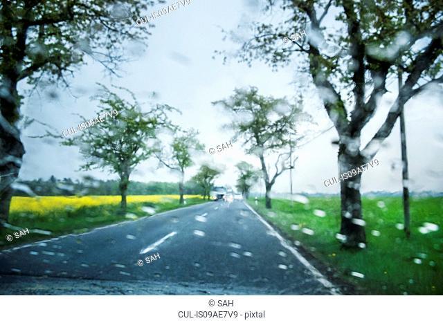 Trees along road in rain, Brandenburg, Germany
