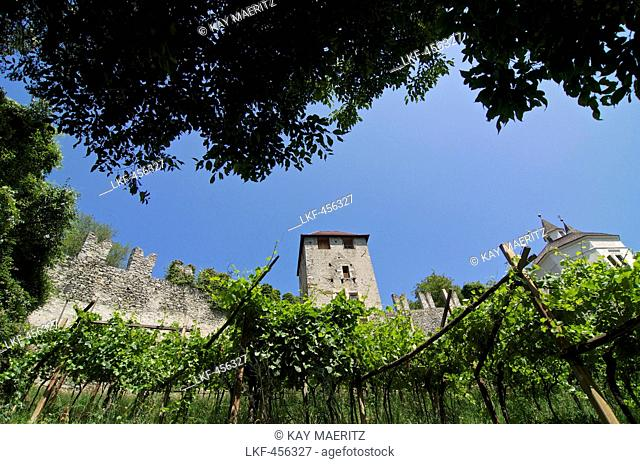 Walls of the fortress of Branzoli above Chiusa Klausen and vines, Val di'Isarco, Dolomite Alps, South Tyrol, Upper Adige, Italy