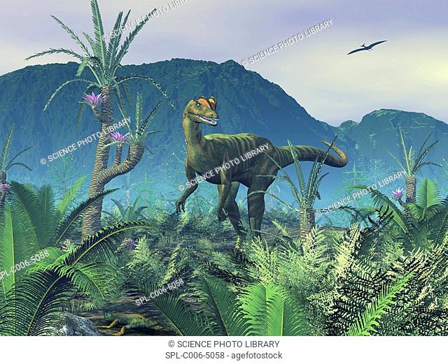 Dilophosaurus. Computer artwork of an adult male Dilophosaurus dinosaur on a hilltop covered in sago palms, Williamsonia gigas, and ferns