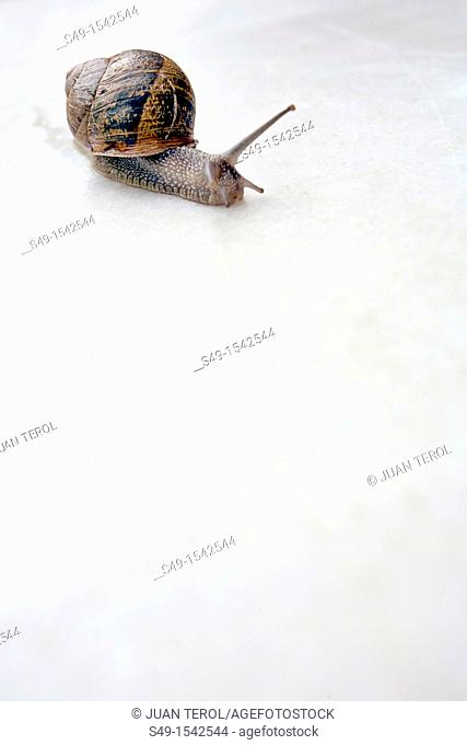 A snail close-up