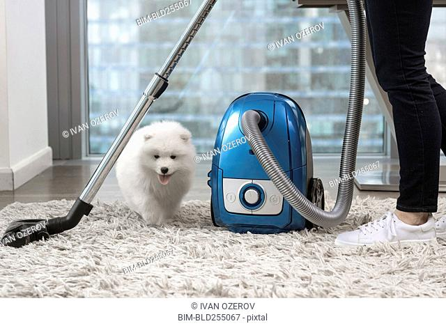 Woman using vacuum standing near fluffy white dog
