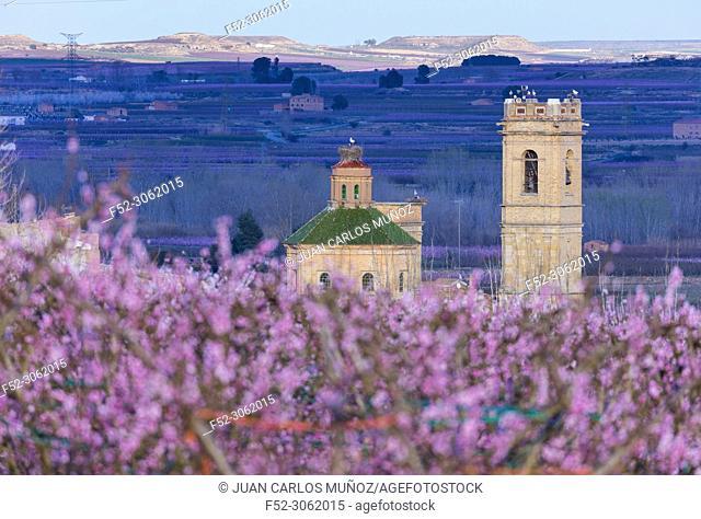 Flowering, Peach tree (Prunus persica), Fruiturisme, Tourism Experience, Aitona village, Baix Segre, Lleida, Catalonia, Spain, Europe