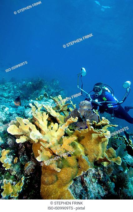 Photographer on coral reef