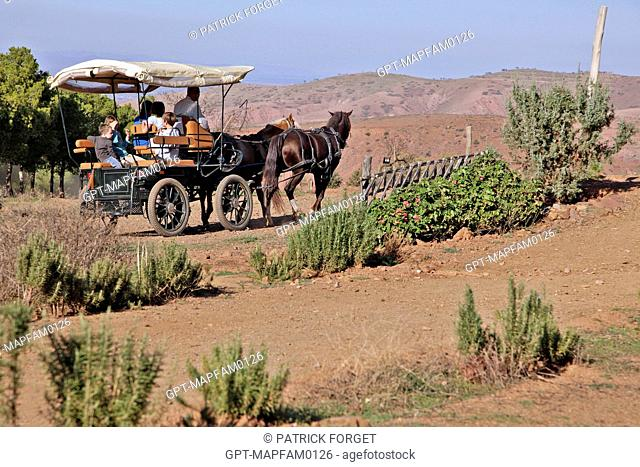 RIDING IN A HORSE-DRAWN CART, DOMAINE DE TERRES D'AMANAR, TAHANAOUTE, AL HAOUZ, MOROCCO