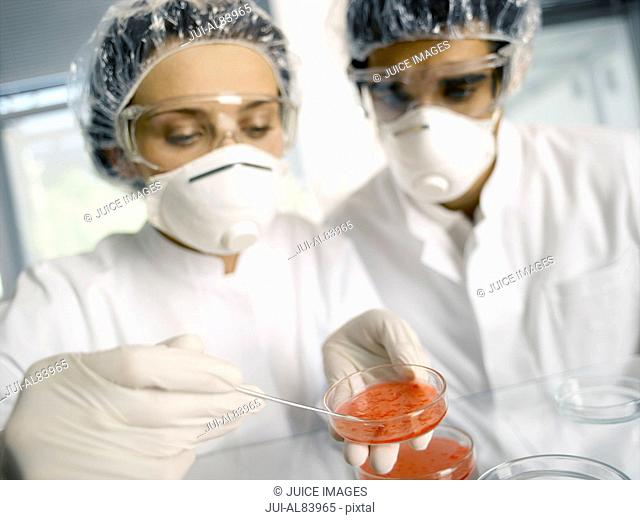 Scientists examining substance in Petri dish