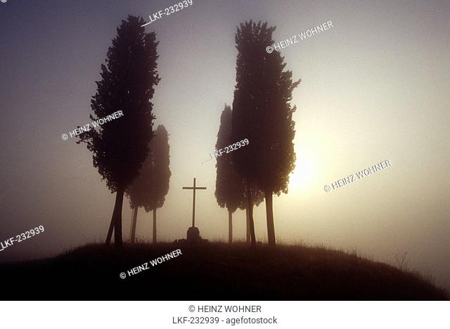 Cypresses at a cemetery, Val d'Orcia, Tuscany, Italy, Europe
