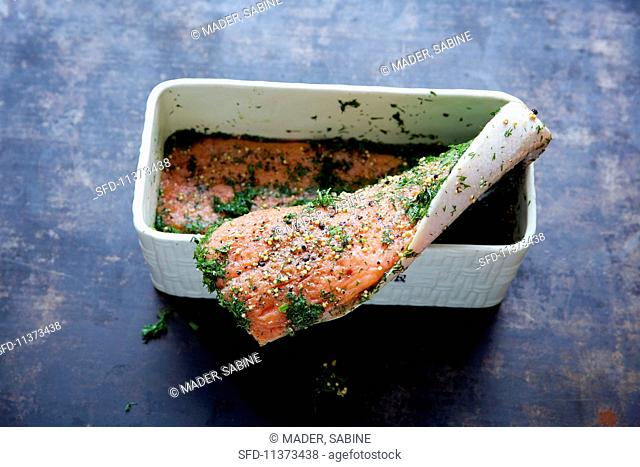 Graved lax being made: raw fillet of salmon being layered in a rectangular container with spices and dill