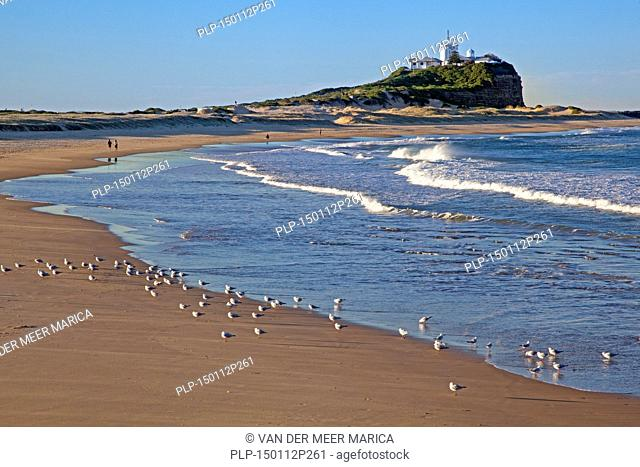 Nobby's Lighthouse and seagulls on the beach at Newcastle, New South Wales, Australia