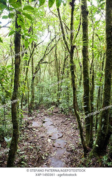 Santa Elena Cloud Forest Preserve  Costa Rica