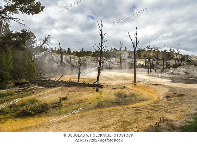 Mammoth Hot Springs Yellowstone National Park, Wyoming, USA